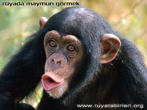 ruyada-maymun-gormek